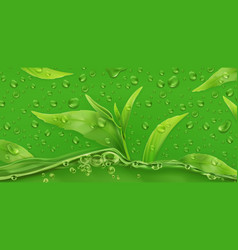 Drops green tea 3d realistic vector