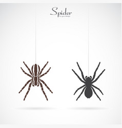spider on white background insect animal spider vector image