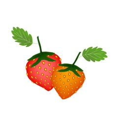 Two Fresh and Sweet Strawberry on White Background vector image