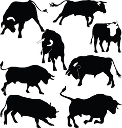 Bulls silhouettes vector image