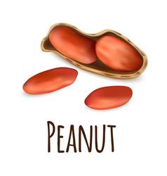 peanut icon realistic style vector image
