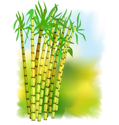 plant of sugar cane vector image
