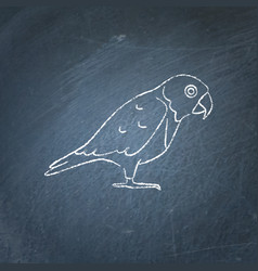 senegal parrot icon sketch on chalkboard vector image