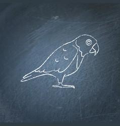 Senegal parrot icon sketch on chalkboard vector