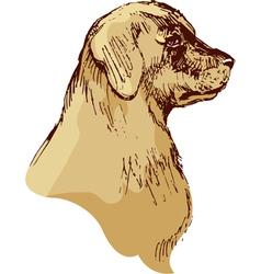 Dog head - bloodhound hand drawn - sketch vector image
