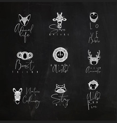 Animals authentic graphic signs chalk vector