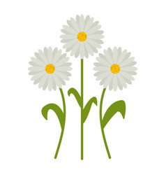 daisy flowers flat icon wild flowers plant vector image