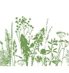 herbal seamless pattern botanical border vector image