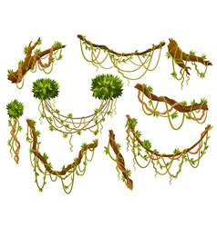 liana or jungle plant or vine wild greenery vector image