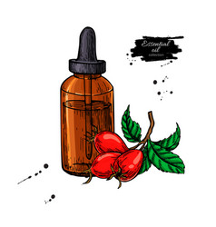 rosehip essential oil bottle with berry hand drawn vector image