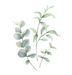 Watercolor arrangement green branches vector