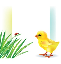 Grass and baby chick background vector image