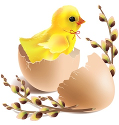 Easter baby chick hatched vector image