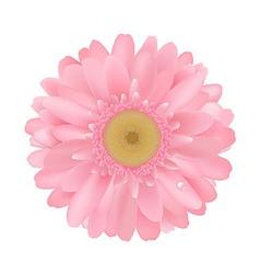 Pink Gerbera vector