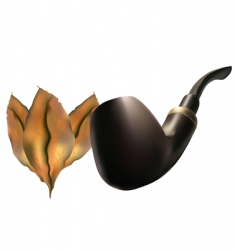 pipe with tobacco leaves vector image