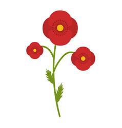poppy field flower flat icon wild flowers plant vector image