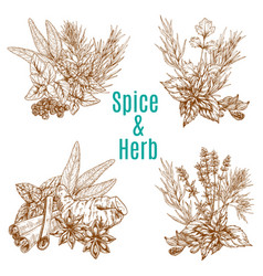 poster of spices or herbs sketch seasonings vector image