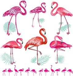 Set of pink flamingoes vector