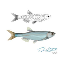 sprat sketch fish icon isolated marine vector image