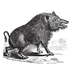 Wild boar Sketch vector image