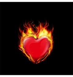 Fire burning a heart on black background vector image