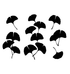 ginkgo biloba leaves and branches silhouette vector image