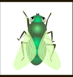 house fly insect vector image