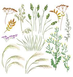wild herbs and cereals set vector image