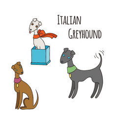 italian greyhound cartoon dog set vector image