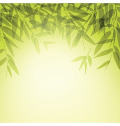 Bamboo trees and leaves at sunset time vector image