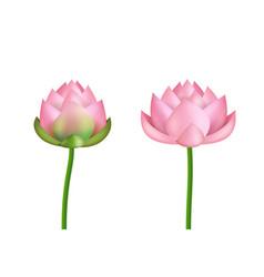 realistic 3d detailed pink lotus flower set vector image