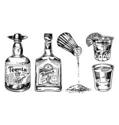 tequila bottles and salt shaker glass shots vector image