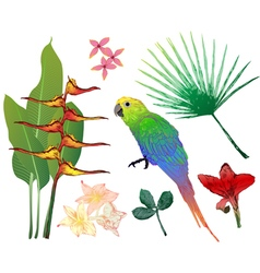 Tropical elements for your design vector