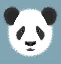 panda isolated on color background vector image vector image