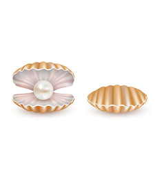 beautiful pearl shell icon set vector image