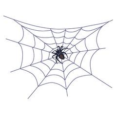 Black big spider on web vector