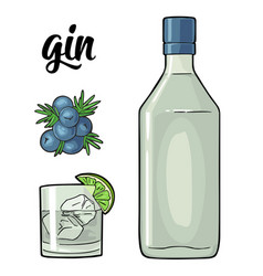 Glass and bottle gin and branch juniper with vector