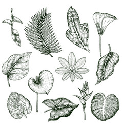 hand drawn tropical plants monochrome set vector image