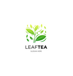 leaf tea vector image