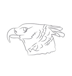 portrait of eagle drawing by lines vector image