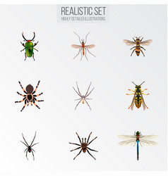 Realistic arachnid spider gnat and other vector