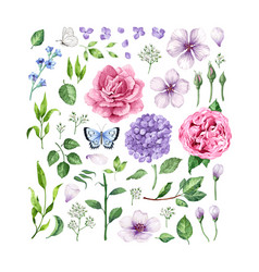 big set of flowers roses hydrangea apple tree vector image