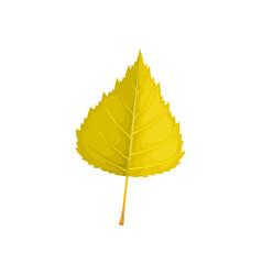 Leaf autumn tree fall foliage isolated icon vector