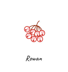 rowan berry icon outline vector image