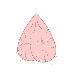 scrotum cartoon isolated mans balls hairy vector image