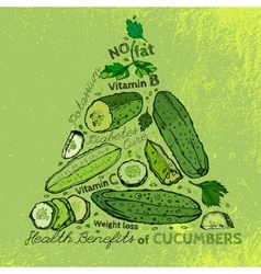 Hand Drawn Cucumber 01 A vector image vector image