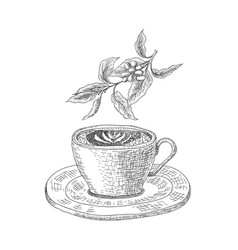 cup with a coffee drink on the white background vector image