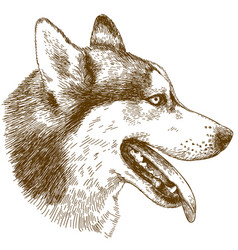 Etching of husky dog head vector