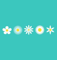 Five camomile set white daisy chamomile icon line vector