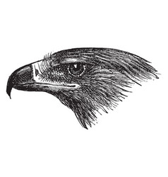 Golden eagle head vintage vector